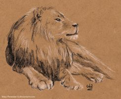 Lion sketch 001 by WillWorks