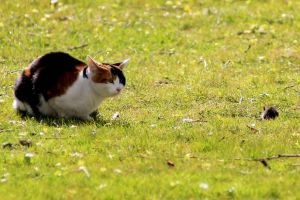 Afternoon with cat and  mouse or rat 1 by pagan-live-style