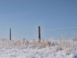 snowy fence 4 by fotophi