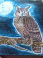 The night of owl by halcon24