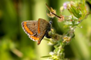 butterfly 102 by jey6