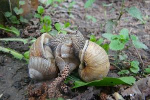 Snails... emm... in love by Panopticon-Stock