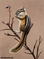 Chipmunk by MoogleyMog