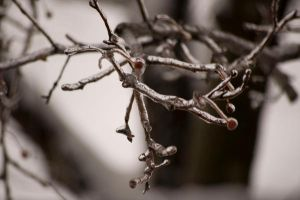 Winter Branches 03 by Cinestress