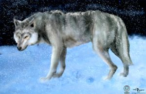 Grey wolf -colors by julianx16