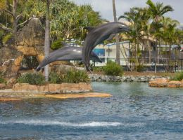 STOCK - Seaworld 2013-71 by fillyrox