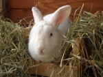 Bunny Approved Hay Manger by Kayosa