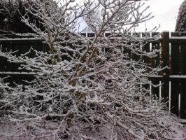 crazy tree snow by Toph-Rulz16