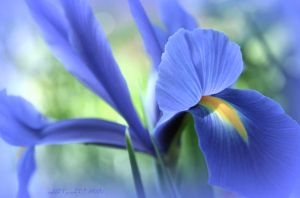 July is blue 12 by martaraff