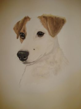 Jack Russel by Featherd9TailsWolf