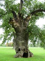 411 - tree by WolfC-Stock