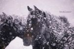 Horses in a Blizzard - Day 138 by escaped-emotions