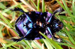 beetle by narin300