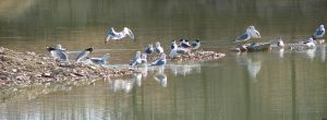 Gulls at the Quarry 3260 by CitizenOlek