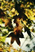 A Love of Autumn by kaitlynslocombe