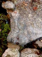 Peeta's Face Camouflaged Into A Rock by DistrictPotter13