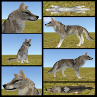 Realistic Gray Wolf Commish by FlyWheel68