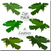 Green Leaves Clear-Cuts by WDWParksGal-Stock