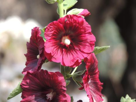 Flower on the Mount of Olives 2 by Medusa-Scorpion