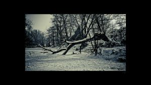 winter 08'09. by djd-t