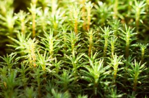 Morning Moss I by Sulde