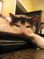 Adobe Laptop 1 by cat-lovers