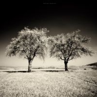 Infrared Spring by DREAMCA7CHER