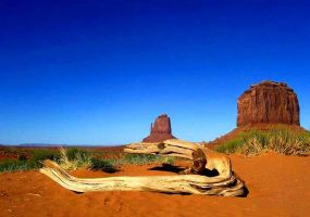 Arizona Heat--resubmitted by sk...
