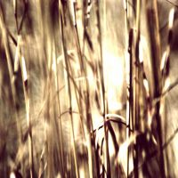 A Square Macro Photo of Grass by pagit