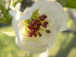 White flower by michael160693