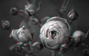 Sleeping Flowers 3-D conversion by MVRamsey