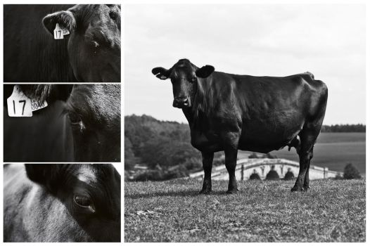 Number 17 Sirloin. by Aden-Photo