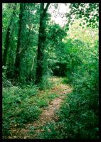 Summer Saluda Path by druideye