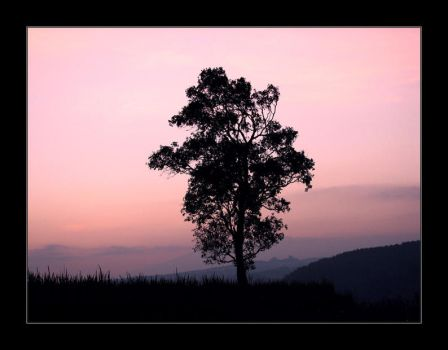 lone tree hill by yoxx