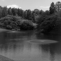 Pond Afternoon by larksgar