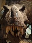 T rex's smile by apple-kitty