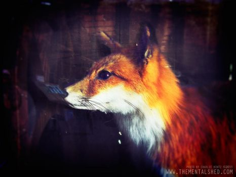 Taxidermy Fox by mentalshed