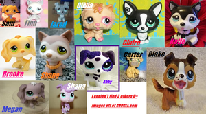 LPS Dogs I have (=3) by Honey-PawStep