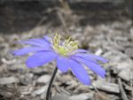 Desaturated Flower by saladbar1