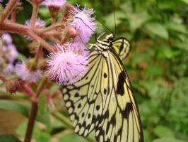 Yellow Butterfly by SoulDragonWithFlow