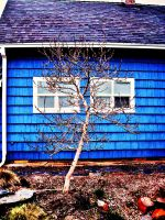 Life in the Little Blue House by Alonewithmyself