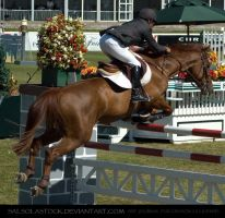 Show Jumper 2 by SalsolaStock