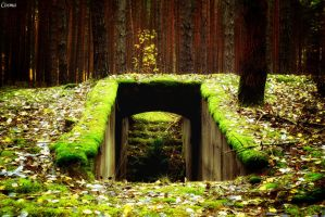 Bunker in forest. by Cosmata