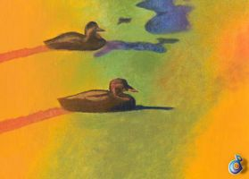 ducks on a pond by dp-designs