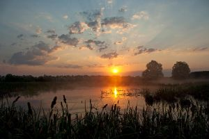 Morning on the swamp by zoldszorny