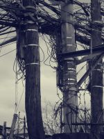 POWERLINES. by cantankerous26