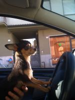 Driving dog by ThEiUfO