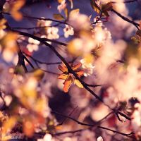 Cherry blossom girl by LorenzoDiFolco