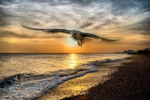 Seagul in brighton beach by visualsoup