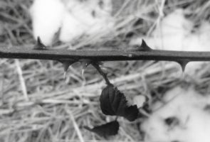 Branch With Thorns On by tracysuzanne